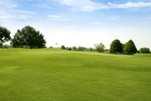 turfgrass products